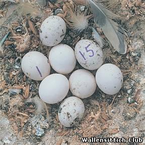 Яйцо - это больше, чем кажется на первый взгляд